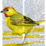 Colorful birds on pages by Paula Swisher