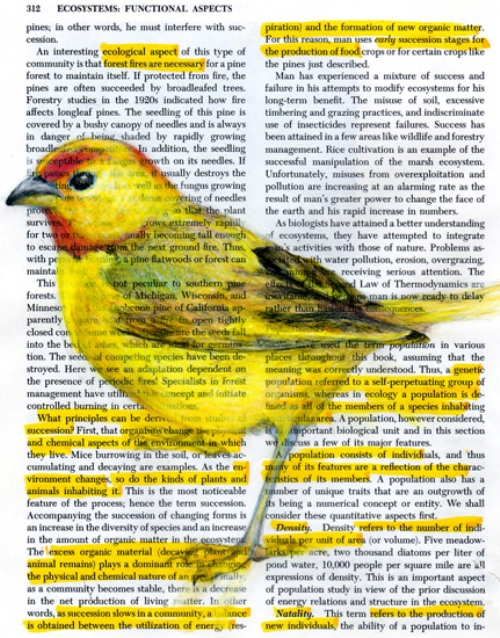 Colorful birds on pages by Paula Swisher. Yellow highlight finch. Drawing on book pages by American artist