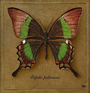 From the series of butterflies