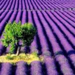 Green on violet