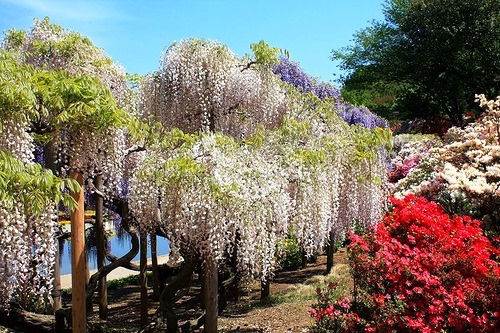 Colorful Ashikaga Flower Park