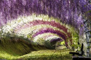 Colorful Ashikaga Flower Park