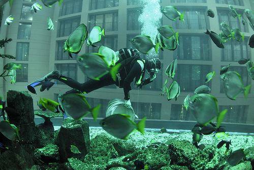 AquaDom - the world's largest cylindrical aquarium, Berlin, Germany