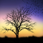 Beautiful silhouette photography by Naveed Mughal
