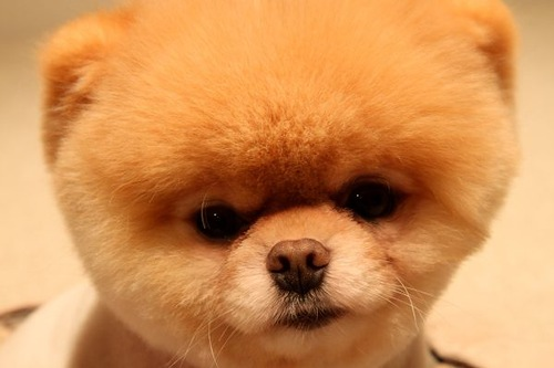 World's cutest dog is NOT dead