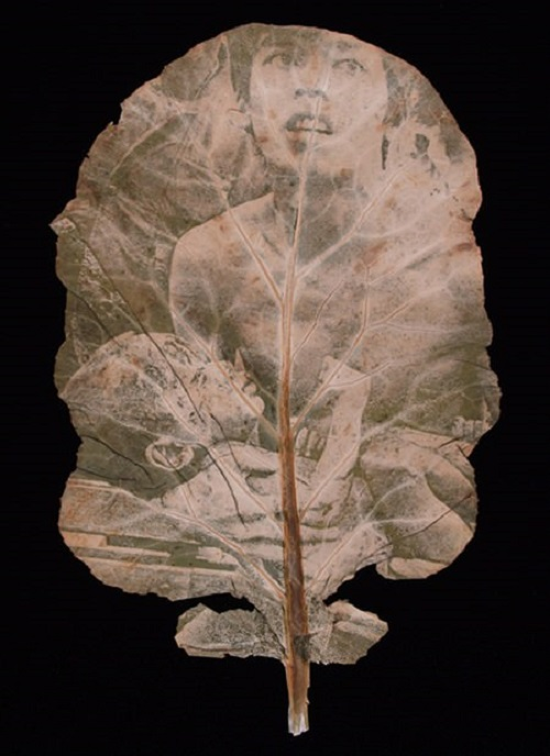 Tragedy of war. Chlorophyll Prints of the Vietnam War on the tropical plants by Binh Danh