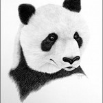 A panda. Mouth painting by American artist Doug Landis