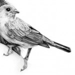 Pencil drawing by British artist Amy Dover