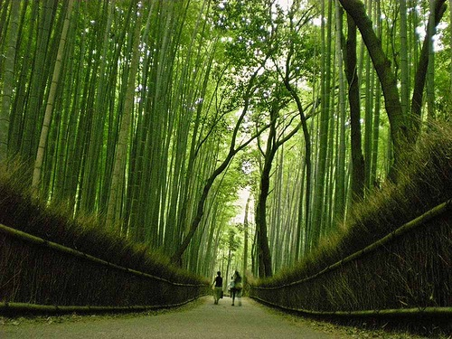 Bamboo groves of Arashiyama