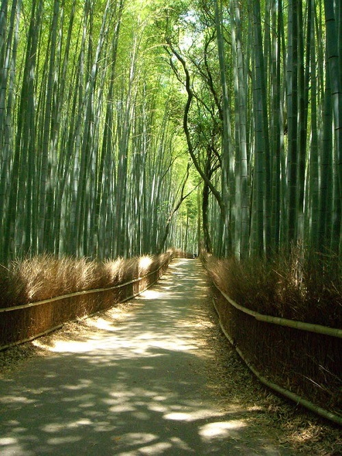 Sagano bamboo forest in Arashiyama, Japan