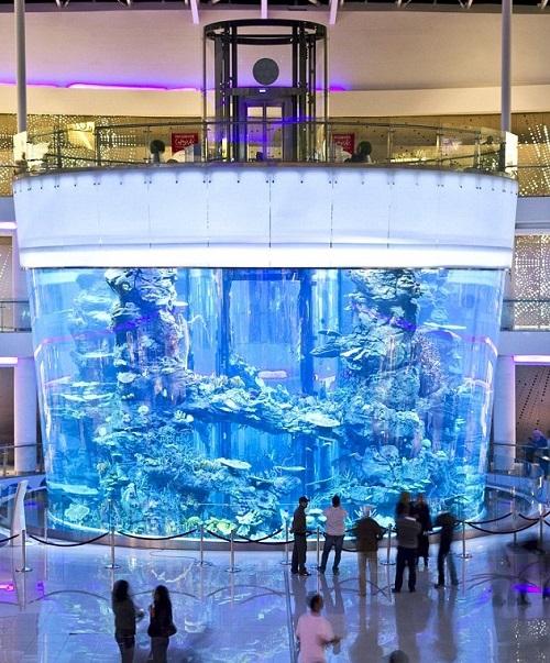 Casablanca Morocco Mall Gigantic aquarium