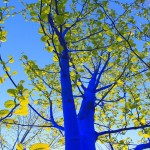 The Blue Trees by Konstantin Dimopoulos