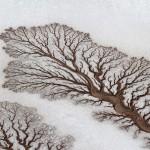 Stunning phenomenon of desert rivers