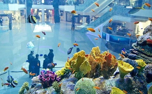 Gigantic aquarium opens in Casablanca