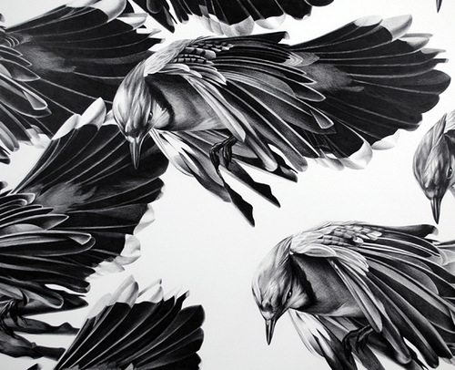 Ravens. Pencil drawing by American artist Christina Empedocles