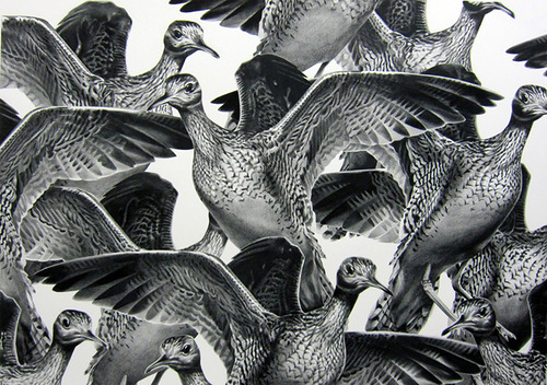 Pencil drawing by American artist Christina Empedocles