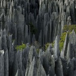 Plants of 'Grand Tsingy', western Madagascar. Photo taken by Explorer and photographer Stephen Alvarez