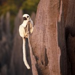Curious lemurs of 'Grand Tsingy', western Madagascar. Photo taken by Explorer and photographer Stephen Alvarez