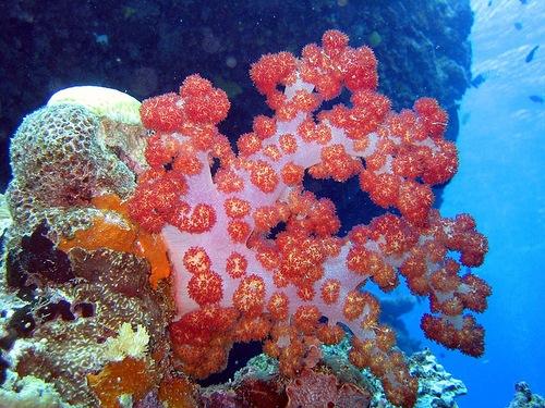 Sea garden of beautiful corals