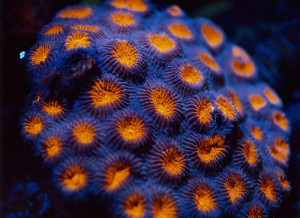Stunningly beautiful corals