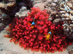 Stunningly beautiful corals