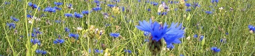Navy blue flower