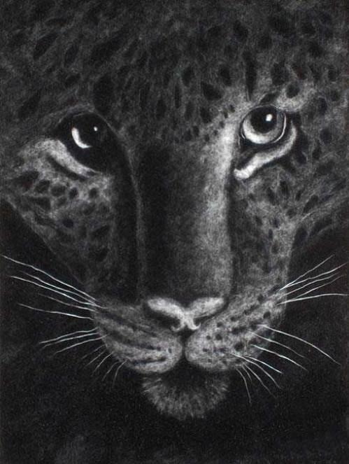 Leopard's look