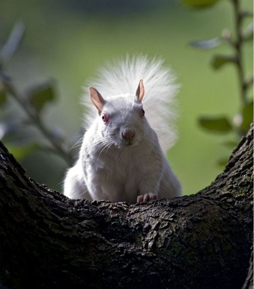 Albino squirrels living in the cemetery