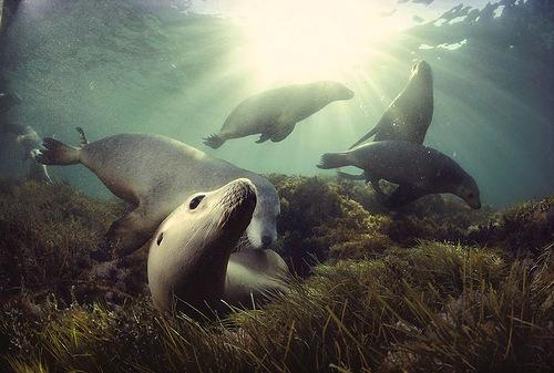 David Dubilet underwater photographer