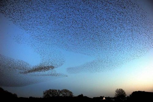 Bird show in the sky of Scotland