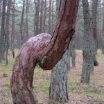 Phenomenon of Dancing wood
