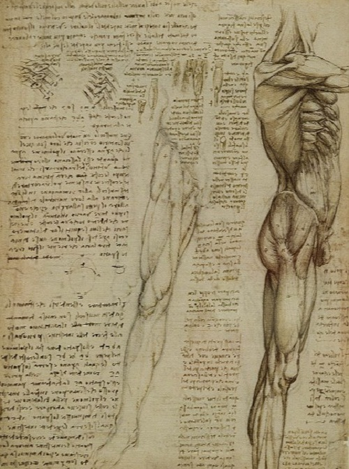 The Anatomist Exhibition of work by Leonardo Da Vinci, at The Queen's Gallery, Buckingham Palace