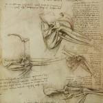A page showing Leonardo's study on anatomy