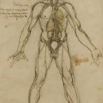 Human study on anatomy by Leonardo da Vinci