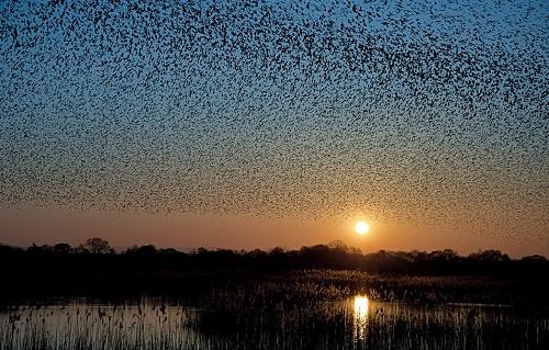 Bird air shows
