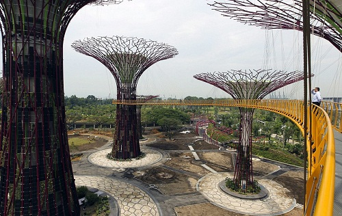 Singapore artificial woodland