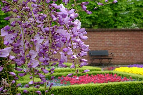 Keukenhof the world's largest flower garden