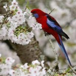 Exotic birds of Maple Glen garden