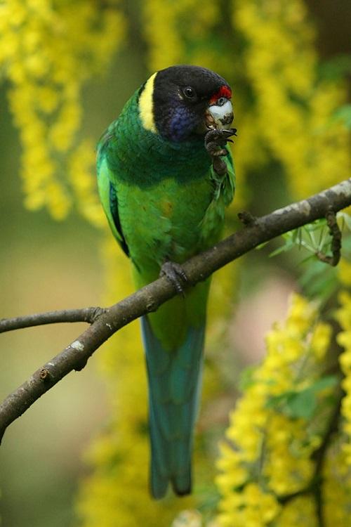 Exotic birds of Maple Glen garden