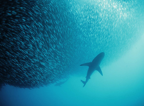 David Dubilet underwater photography