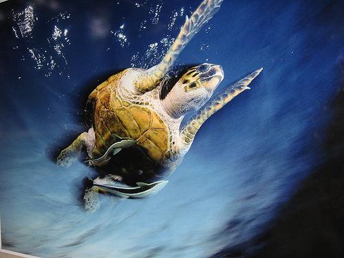Photo by American underwater photographer David Dubilet
