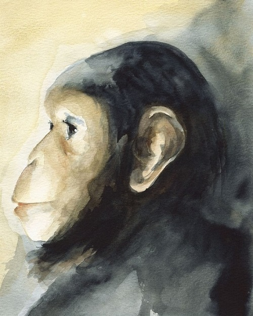 Monkey's watercolor portrait. Beautiful Vintage portraits of animals by French artist LesElegantes