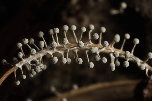 Alien landscape of Slime moulds, or molds - micro mushrooms that grow on the plants