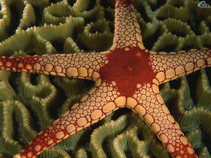 Closeup - starfish