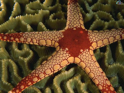 Closeup - starfish