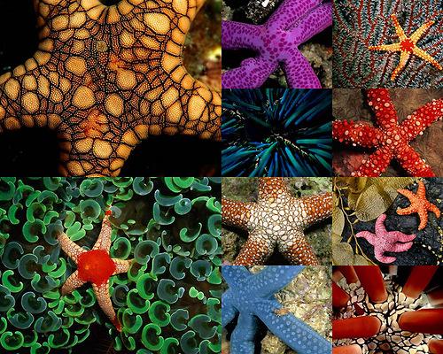 Variety of colors - starfish