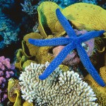 Variety of colors - starfish