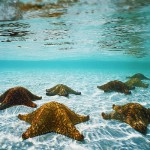 Natural wonder - starfish