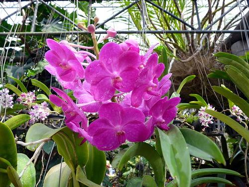 Suan Nong Nooch flowers