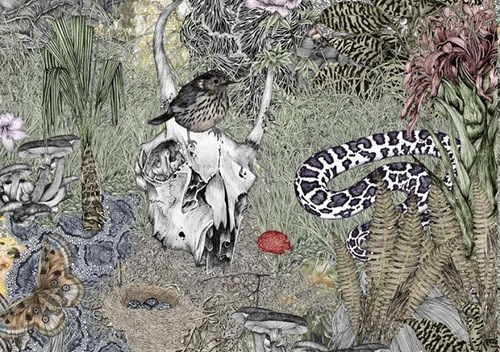Wildlife Illustration by Australian artist Victoria Garcia
